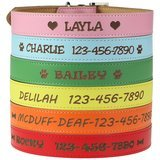 Custom Catch Personalized Dog Collar – Engraved Soft Leather