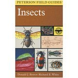 Peterson Field Guides A Field Guide to Insects: America North of Mexico